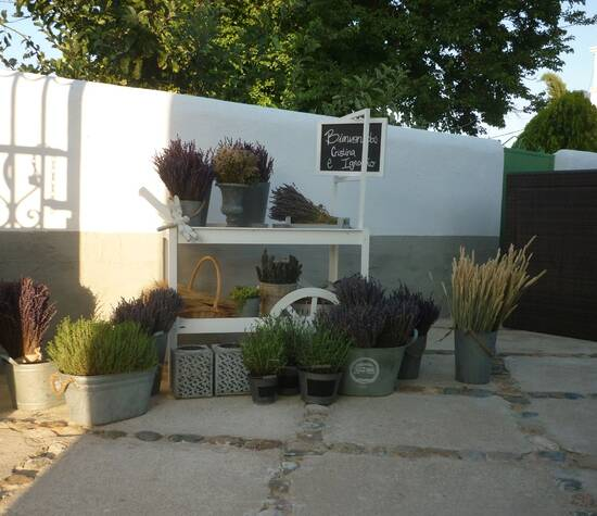 Rincón de Lavanda.
